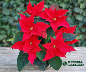 holiday plant and garden tips