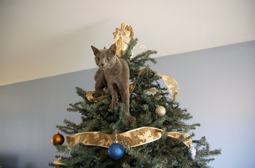 be prepared to re decorate the tree after the cats have fun but a cat mas tree not only answers your kittys santa paws prayers it means shell be more