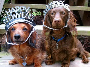 New Year's Tips For Pets