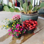 May Gardening: Russell Feed Decatur