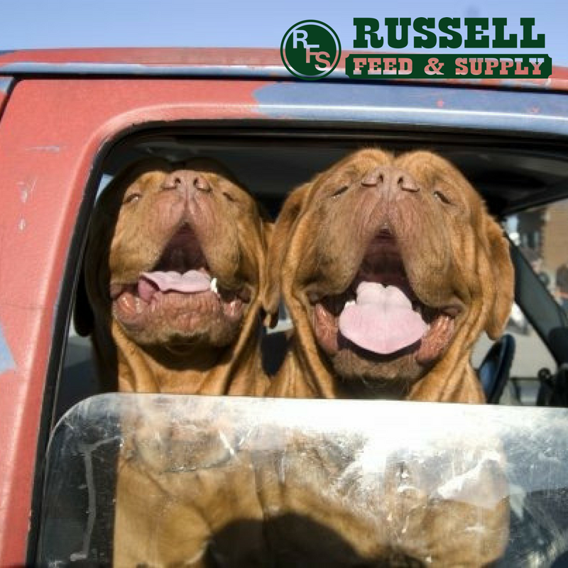 Russell Feed in Crowley